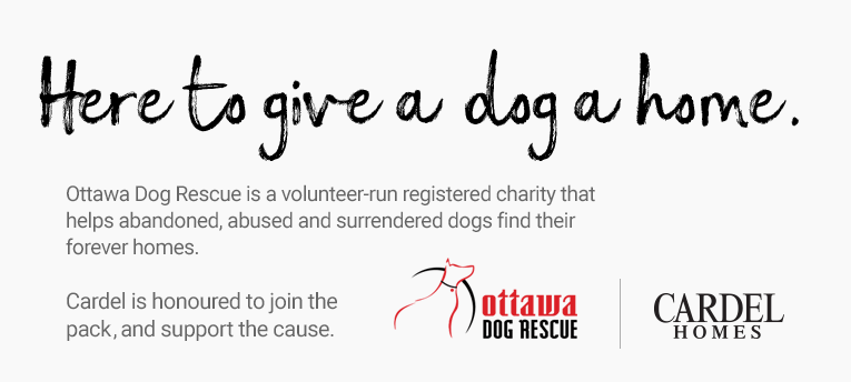 Here to give a dog a home. Ottawa Dog Rescue is a volunteer-run registered charity that helps abandoned, abused and surrendered dogs find their forever homes. Cardel is honoured to join the pack and support the cause. Ottawa Dog Rescue Cardel Homes