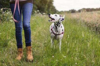 cardel-homes-calgary-cornerbrook-lady-and-dog