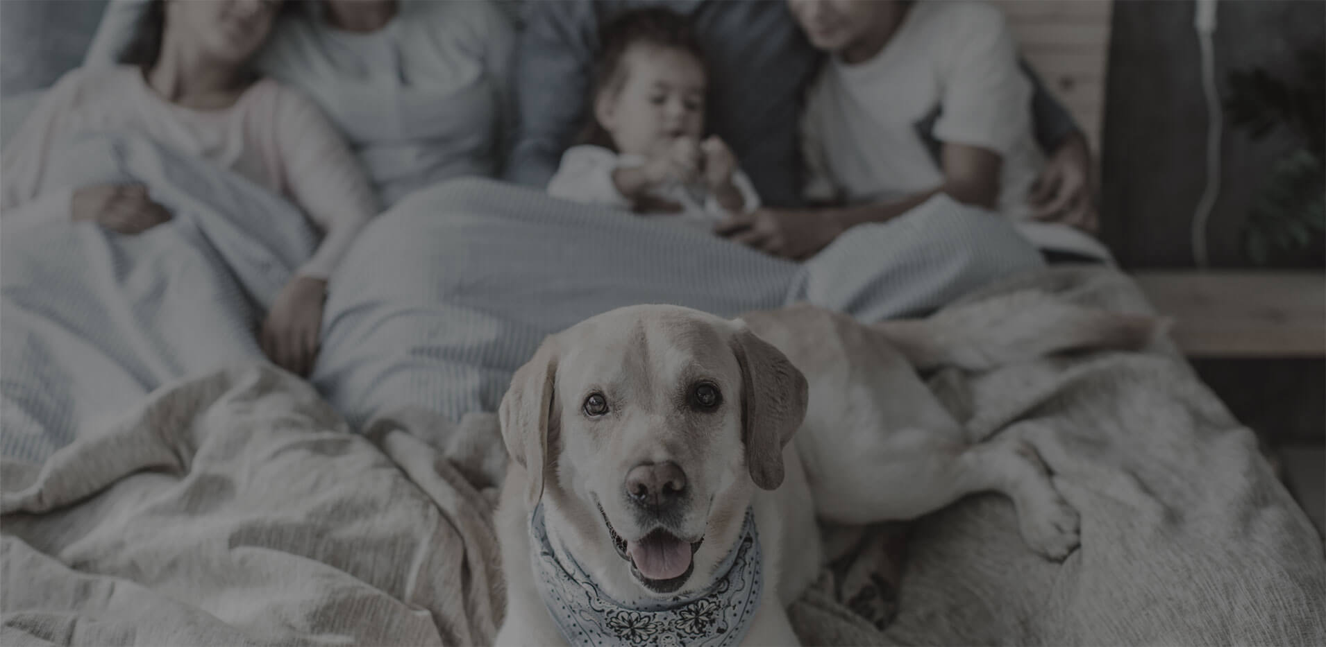 Family and dog on bed