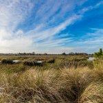 cardel homes tampa worthington community photos 17