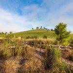 cardel homes tampa worthington community photos 20